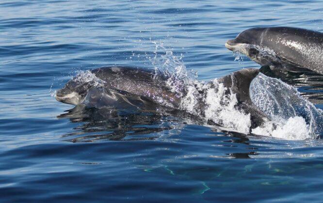 dolphins off the moray coast