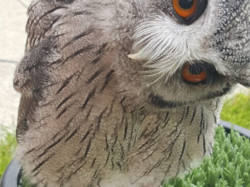 Speyside Falconry