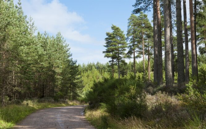 Picture of Culbin woods