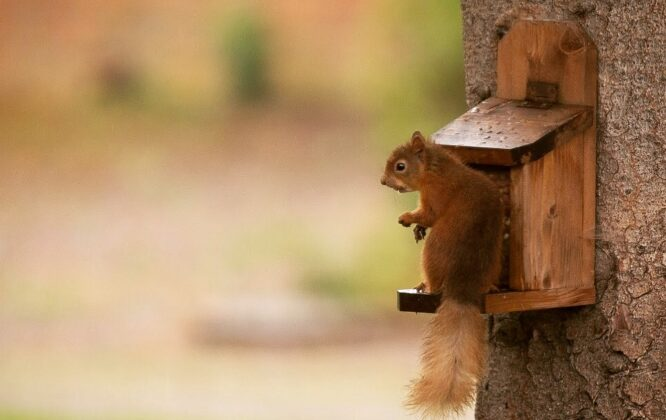 Picture of Speyside Gardens Squirrel